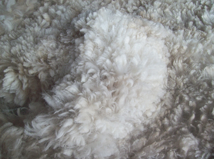 Superfine Alpaca Fleeces